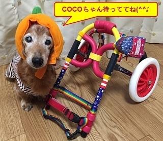 COCO9.jpg