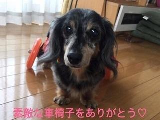 きくちゃん8.jpg