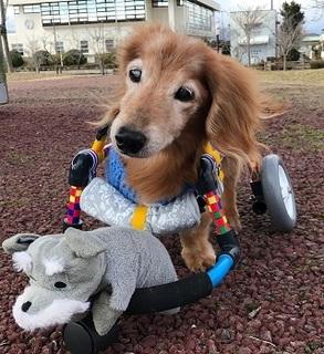 くまモンの車椅子
