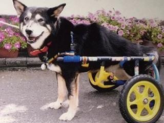 犬の車椅子-Lサイズ