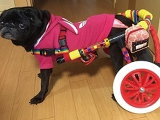 犬の車椅子-Mサイズ