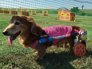 犬の車椅子-Sサイズ