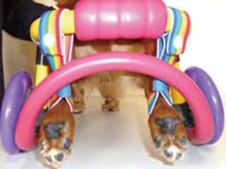 犬の車椅子-お守りのミニリュック