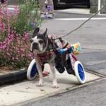 肉球柄の車椅子